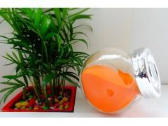 鱼类专用色素 植物提取