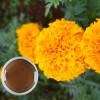 叶黄素浸膏 水产 万寿菊提取