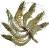 求购大量养殖海虾 要求冻品 只跟养殖户合作