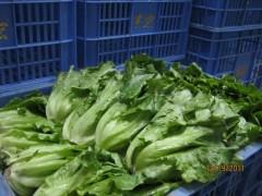 东城食堂蔬菜配送