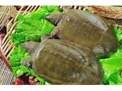 甲鱼叶黄素价格甲鱼叶黄素供应商