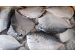 批发进口冷冻鲳鱼 黄菇鱼 黑菇鱼 鳗鱼 批发代理