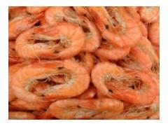 供应优质对虾