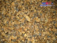 大量供应泥蚶螺、海米、虾皮等