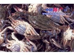 供应梭子蟹