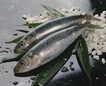 菲律宾新建的冷藏工厂使沙丁鱼行业受益