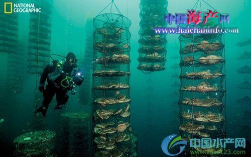 海洋生态混养系统—养殖环境新救星