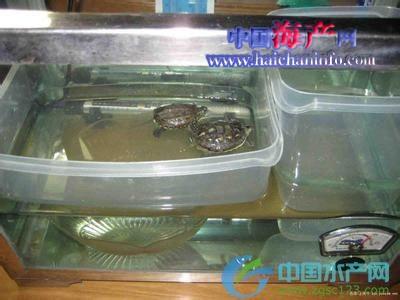 乌龟的生长发育与水温调节