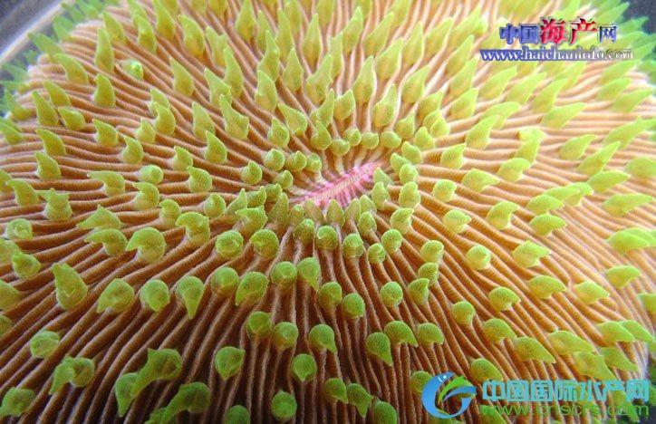 夏威夷创建世界上第一家珊瑚冷冻银行