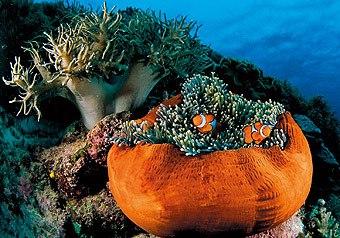 海水酸化鱼儿变傻