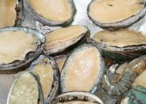 保健食品  水产品  淡干海参  野生海