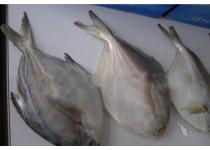 干海参;干鲍鱼;冷冻鱼类;金钩海米;干贝
