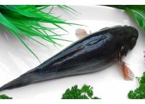 各种海产,龙虾,富贵虾,青明虾,珍宝蟹,笋壳鱼