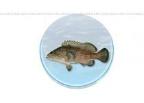云纹石斑鱼,山东海产,半滑舌鳎,赤点石斑鱼,海产