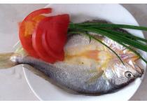 缅甸黄鱼,野生大黄鱼,蟹子,鲍鱼,海参招商