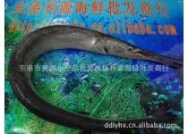 鲜活海参 梭子蟹 对虾 黄蚬子 杂色蛤 招商加盟