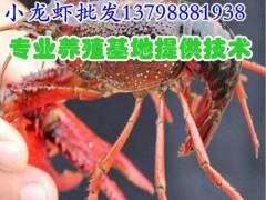 五峰县/长阳县/小龙虾价格/小龙虾养殖技术