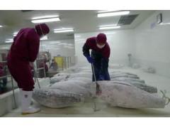 上海海鲜低温冷库出租-水产冷库出租价格