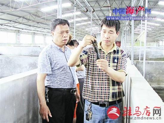 河南驻马店市富池堡水产养殖填补龙虾产业空白