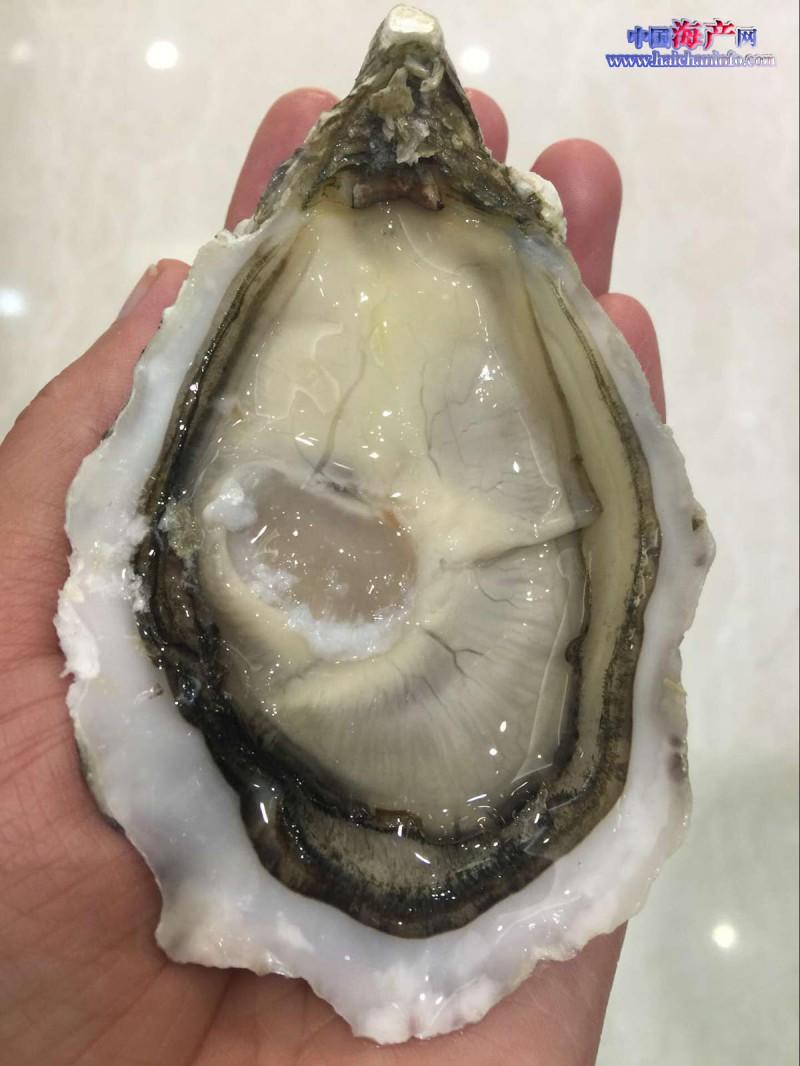 法国白珍珠
