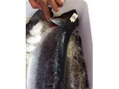 供应海鲜冻品 挪威三文鱼批发 海鲜冻品批发 三文鱼吃法