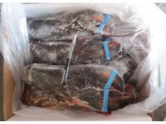 加拿大原装进口波龙 波士顿大龙虾生冻 酒店特色食材