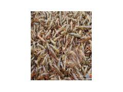 一亩地能长成多少成品虾小龙虾一亩地养殖成本多少