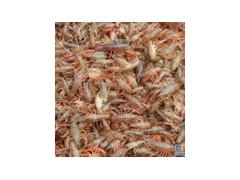 龙虾苗价格龙虾苗养殖技术龙虾苗繁殖基地