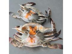 鱼鲜通 18年8月份舟山渔场第一批梭子蟹预定中 统货批发海鲜