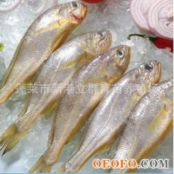 冷冻 野生小黄鱼 50/60 70/90 5kg/箱