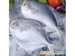 批发 冷冻鲳鱼 5kg/箱 80/100 400/500