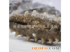 养殖场直销 供应各种规格即食海参 10-12头/斤 2012年新货预定!