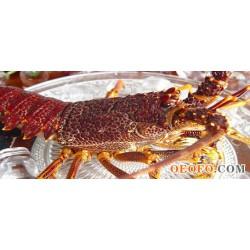 澳洲龙虾,澳龙,进口海产,太子蟹,冰冻扇贝,鲍鱼