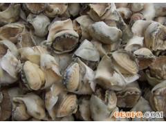 海螺头、金玉贝、金玉螺