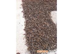 地中海极品干带刺海参(golden spiky),100%纯野生,无盐,无砂,无污染,根据欧盟高标准做成,营养价值极高