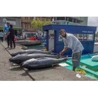 马累鱼市场