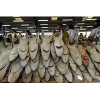 迪拜德拉鱼市场