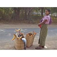 缅甸实兑港鱼市