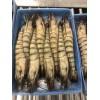 泰国海产白虾草虾