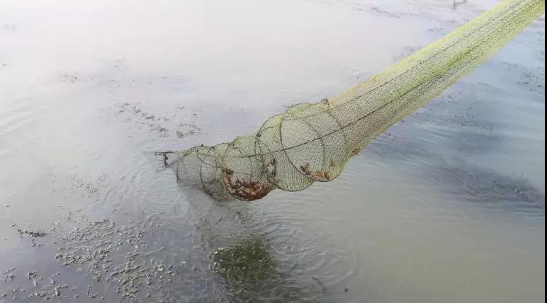 1000斤/亩!这里是全国小龙虾亩产最高的产区,日流通量达20万斤