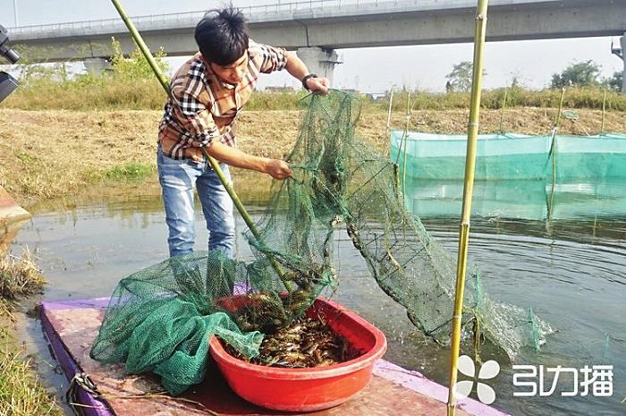 一只龙虾背后的创业故事:常熟85后小伙专攻水产养殖
