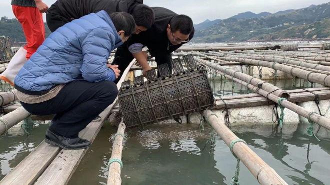 2019年春季海参价格的主导权在福建霞浦,为什么福建的养殖户还是高兴不起来?
