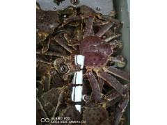 进口帝王蟹