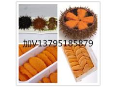 海胆料理/海胆罐头/海胆水饺