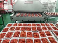 厂家直销小龙虾速冻机