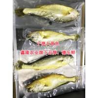 500g穗乐鲜三去黄花鱼供应批发-鑫隆农业黄花鱼系列