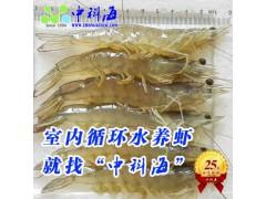 南美白对虾、日本对虾等各种虾类养殖