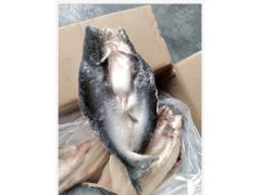 茂名恒兴水产长期提供开背巴沙鱼,巴沙鱼原条
