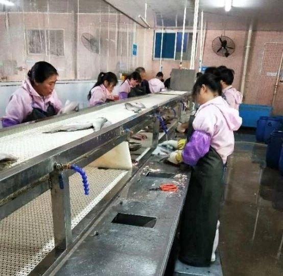 试看喜记水产是怎么引领太阳鱼产业发展的?