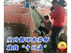 高效创新 循环水养虾系统